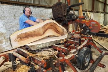 A tree-mendous cut