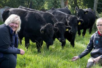 Return of cattle to 'Bay of the Cows' after 50 year absence?