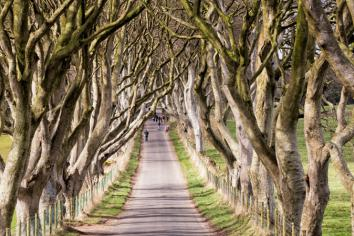 Council issues Dark Hedges safety demand